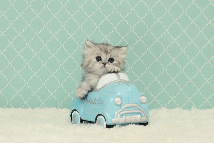 Wanna have a ride?
