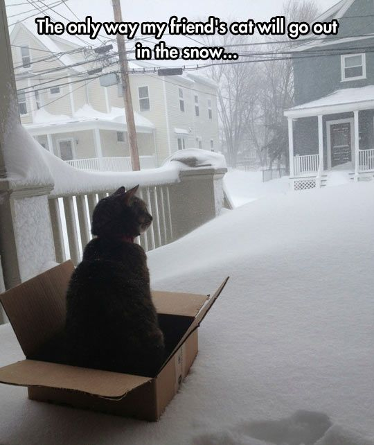 I should buy a sled cat  // funny pictures - funny photos - funny images - funny pics - funny quotes - #lol #humor #funnypictures