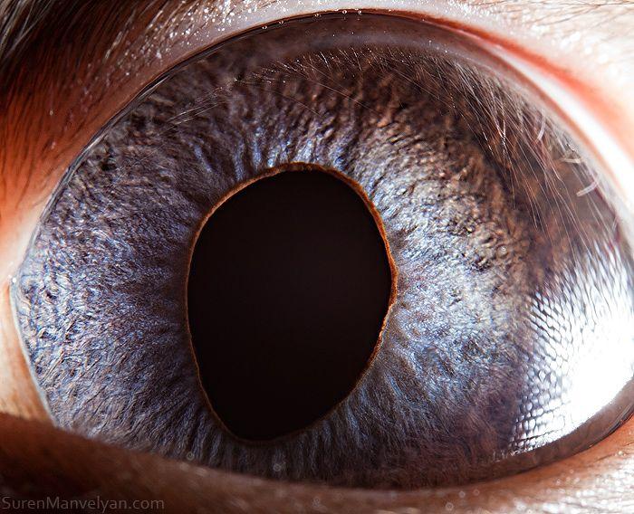 Best Eyes Images On Pinterest - 24 detailed close ups of animal eyes