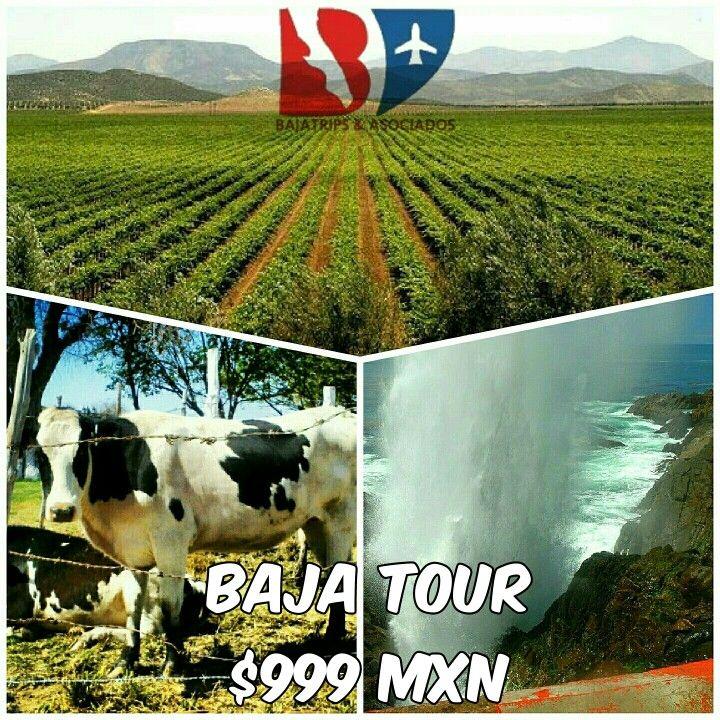 Baja Tour
