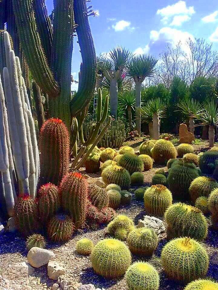 Jardín de cactus, con Ferocactus pilosus (espinas rojas), Echinocactus grusonii (espinas doradas) y, probablemente, Cleistocactus strausii (tallos cubiertos de densas espinas blancas)