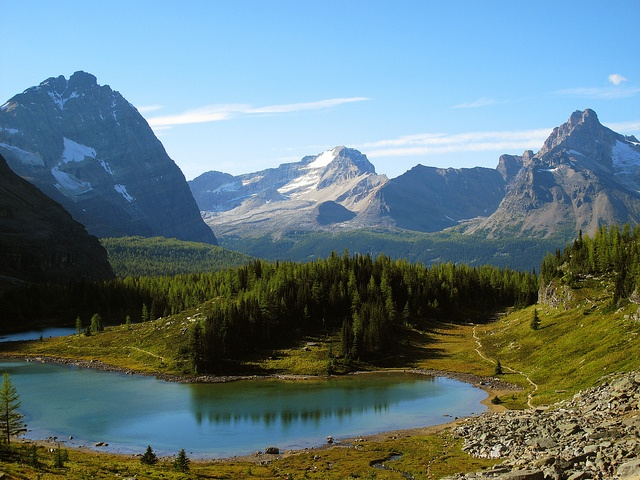 lake o'hara alpine circuit in alberta canada: Alberta Canada Ne, Alpin Circuit, Nature, Canada Lakes, Beautiful Flowers, Alpin Lakes, Alberta Beautiful, Natural, Lakes O' Haraalpine