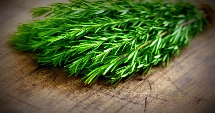 Une plante merveilleuse qui combat la fatigue tout en énergisant le corps et l'esprit !