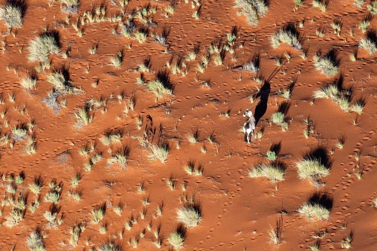 A Gemsbok stands proud on the unforgettable deep oraange dunes of the the Naukluft. Namibia