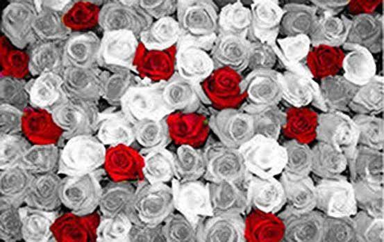 Resultado Final: Rosas Rojas.