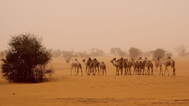 Dongola, Sudan - sudan - the black pharaohs photo by Retlaw Snellac Photography on Flickr