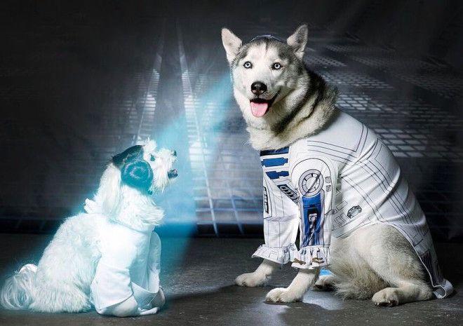 Naprostá bomba! TOP 7 psů, oblečených ve stylu STAR WARS - Evropa 2