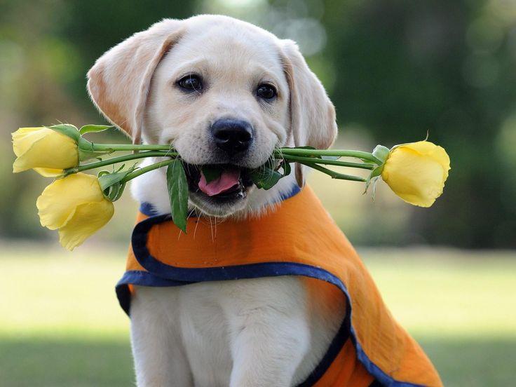 Cute #puppy