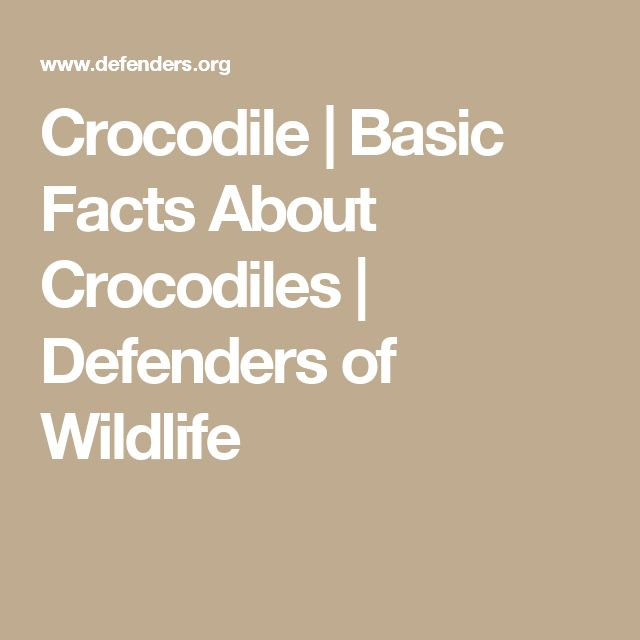 Crocodile | Basic Facts About Crocodiles | Defenders of Wildlife