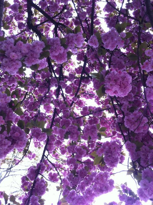 violet cascade. Beautiful!