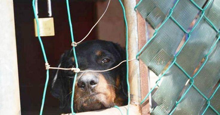 Elaboren una ley Federal contra el maltrato animal! FIRMA Y COMPARTE ESTA PETICIÓN AHORA!