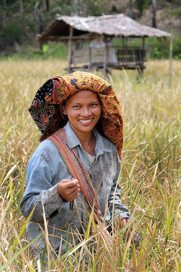 Smiling rice farmer on Nias Island. Afulu, North Nias Regency, Indonesia. Photo by Bjorn Svensson. www.northniastourism.com