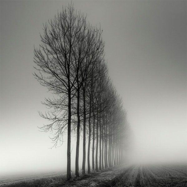 Tree Landscape Photography by Pierre Pellegrini