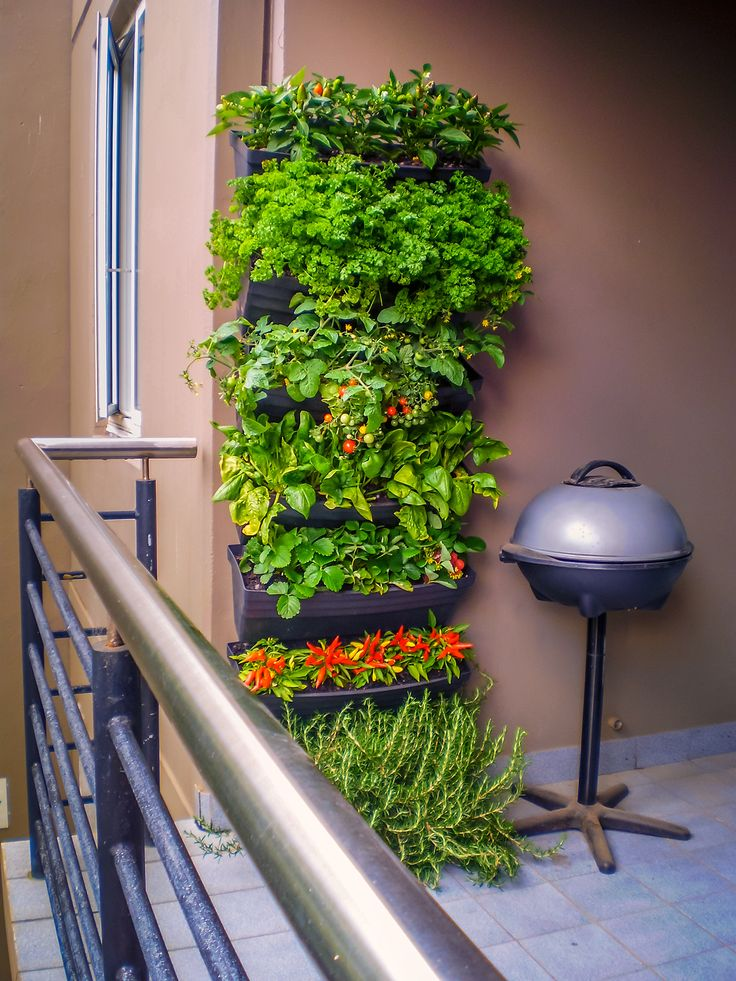 Herb garden on a small balcony. Great use of a wall to great a living garden.