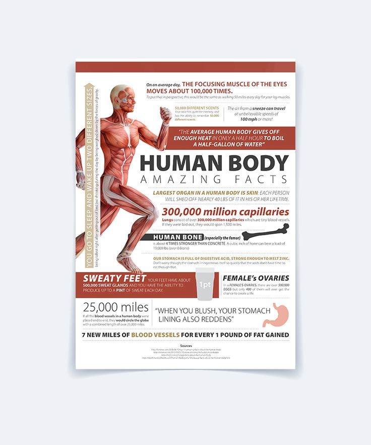 Human Body - Infographic on Behance
