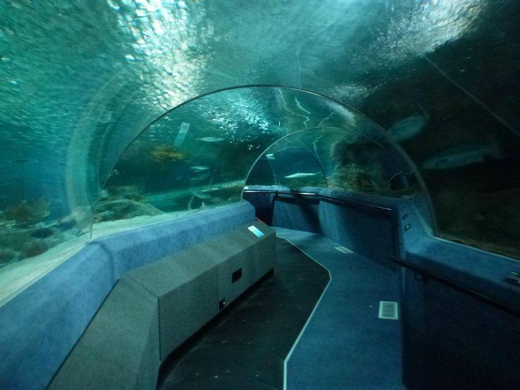 National Aquarium $20