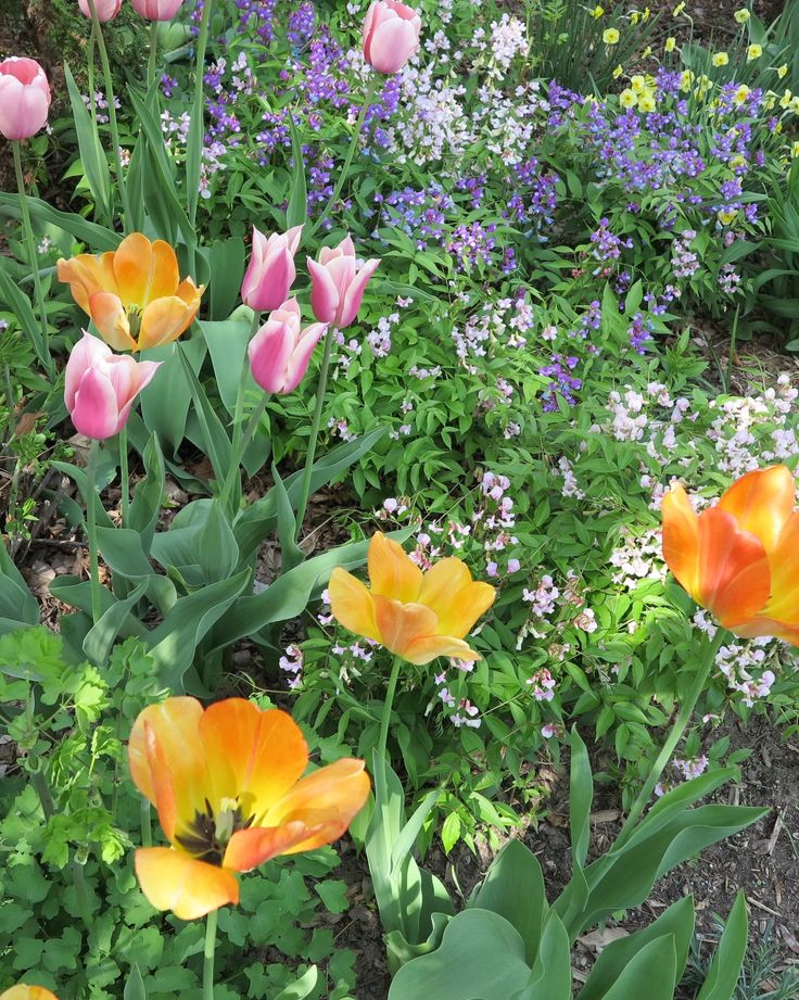Where and when to plant spring bulbs