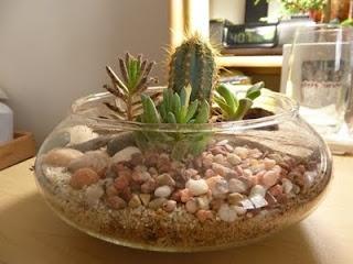 ....here we go....cacti n' succulent terrarium.  ahhh.