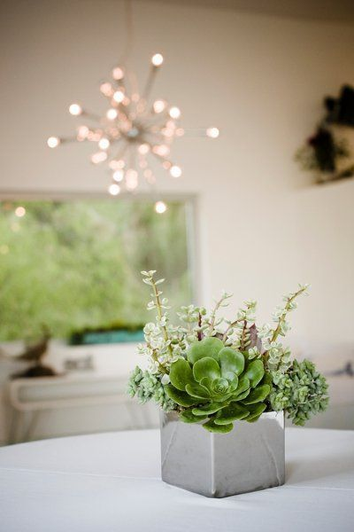 Small Concrete Block With Succulents Centerpiece For A Cocktail