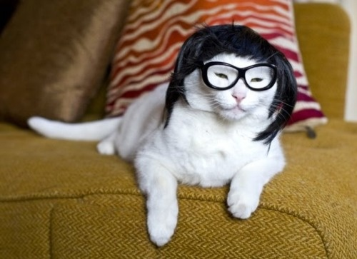 Wiggy KittyHipster, Wear Wigs, Costumes, Glasses, Austin Power, Long Hair, Cat Wear, Kitty, Animal