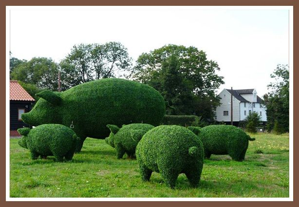 Finally! Topiary pigs :) Very cool!