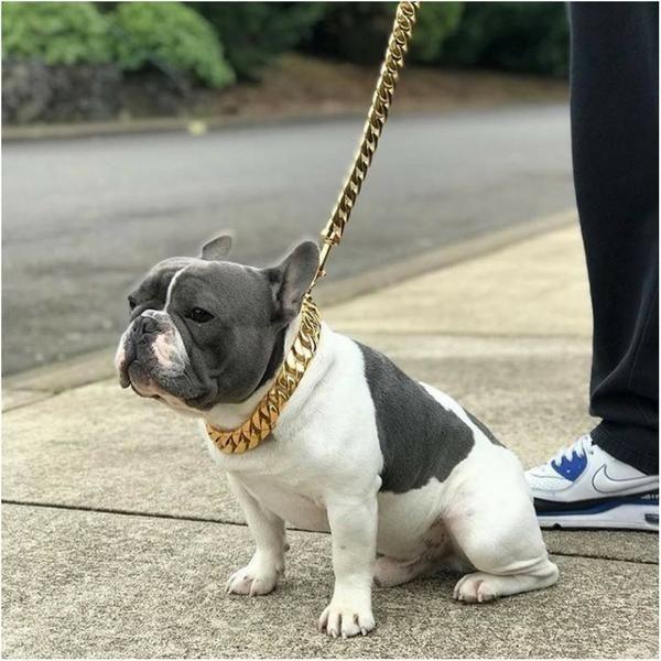 Cuban Dog Collar Leash Dog Collars Leashes Street Dogs