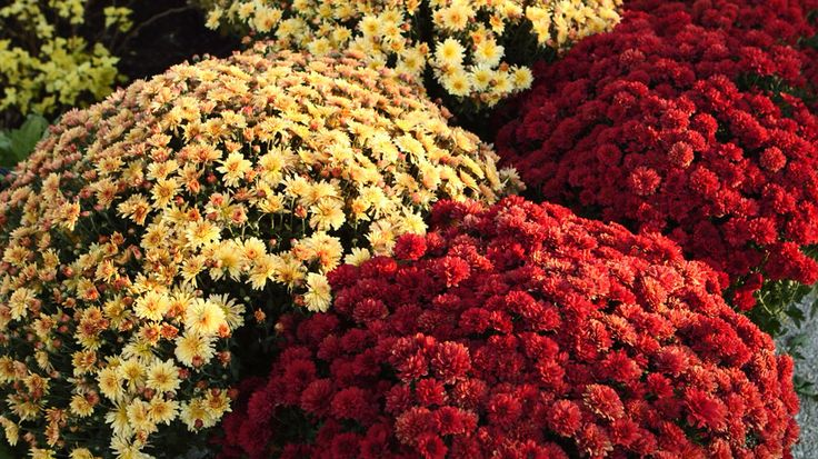 324 Best Images About Gardening Plants And Flowers On