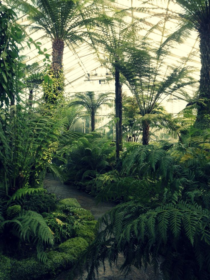 The Fern Glasshouse at Royal Botanic Garden Edinburgh  so excited to go here in a couple of weeks!!