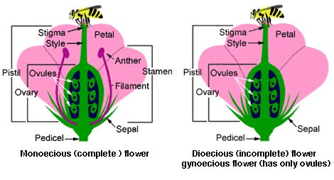 Terms Defining Flower Parts  - See more at: http://worldoffloweringplants.com/terms-defining-flower-parts/