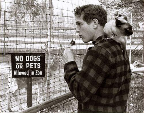 paul newman + friend -I had a Siamese cat that did this same thing-wish I had Paul Newman too.
