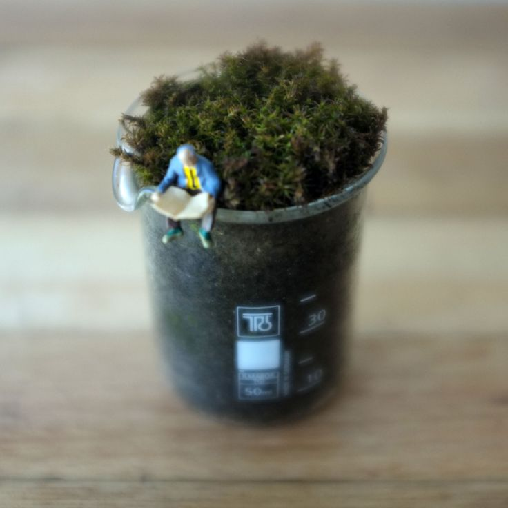 Miniature Beaker Terrarium by Bramble Thicket with a very interested reader.