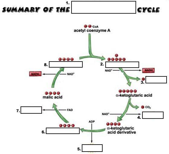19 best Biochemistry images on Pinterest | Biochemistry, Cycling ...