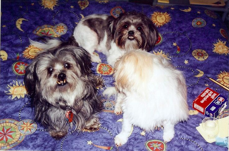 Billy, Sharney & Maxi - when they were a family :)