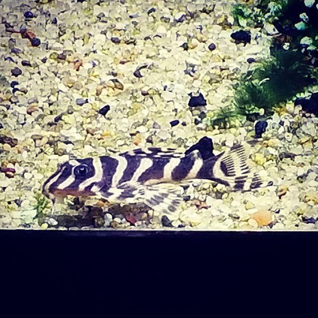 Pin On Aquarium Co Op Fish Pictures