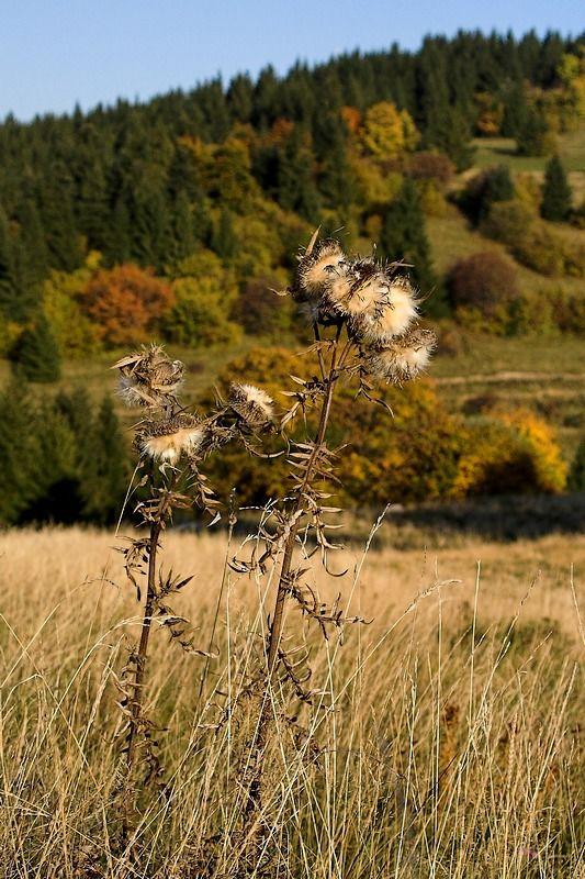 Autumn feeling, Kremnica, Slovakia