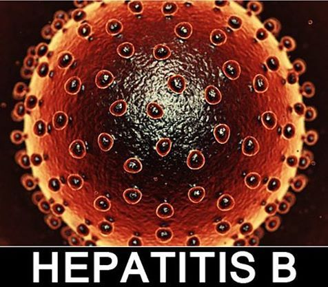 hepatitis b research paper