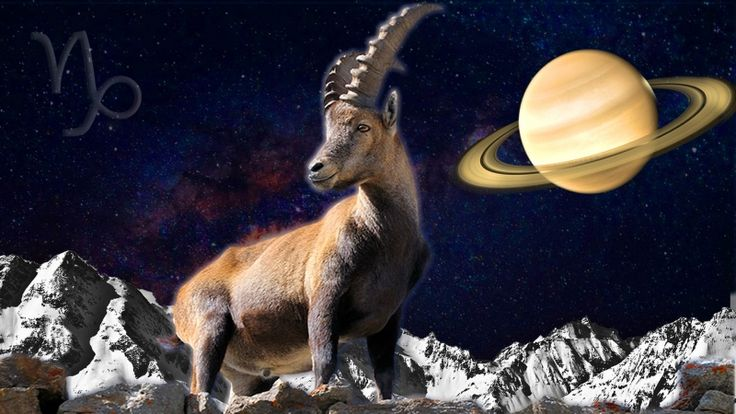 Weekly Horoscope Capricorn: November 6 – November 11, 2017 Anyone looking at your busy schedule nowadays would blanch. And truth to tell you yourself are beginning to have your doubts about whether you can meet all of the demands and deadlines. Thankfully you're a Capricorn and like a mountain goat scaling the sheer face of a cliff you will find footholds in the thinnest of crevices . . .