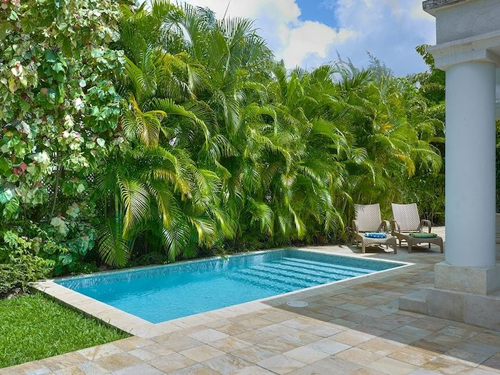 Plunge pool with Lusch tropical planting, swimming pool Brisbane