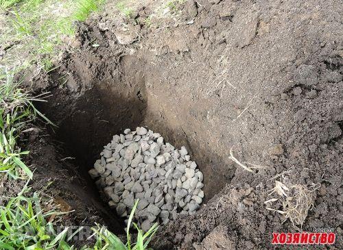 Среди виноградарей очень популярна «умная яма» для посадки саженцев. Умной она называется потому, что для маленького саженца роется огромная яма, в которую засыпается щебень. На него ставится труба дл…