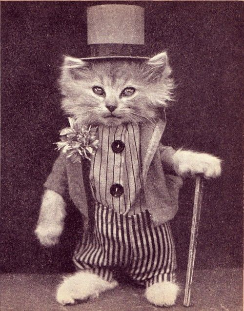 <3 vintage cat photo <3: Cats, Kitty Cat, Kitten, Animals, Cupcake, Crazy Cat, Top Hats, Vintage Photo, Vintage Cat