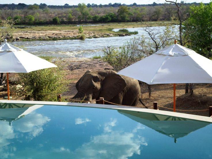 George II the Elephant next to the main pool