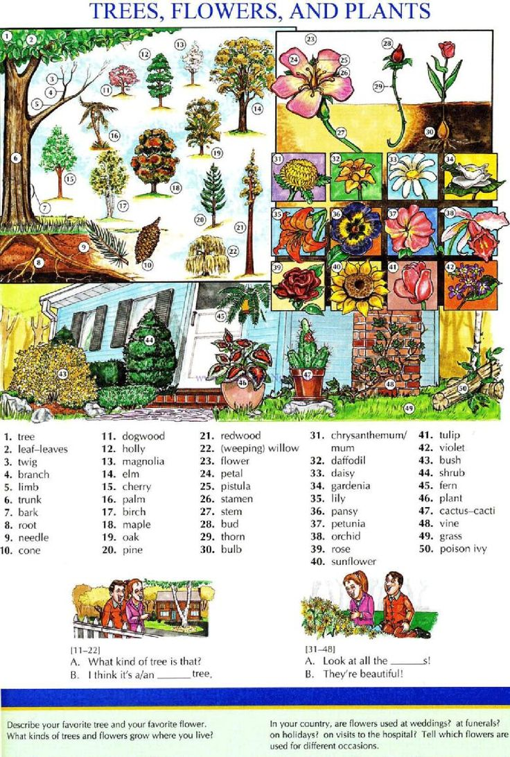 109 - TREES, FLOWERS, AND PLANTS - Pictures dictionary - English Study, explanations, free exercises, speaking, listening, grammar lessons, reading, writing, vocabulary, dictionary and teaching materials