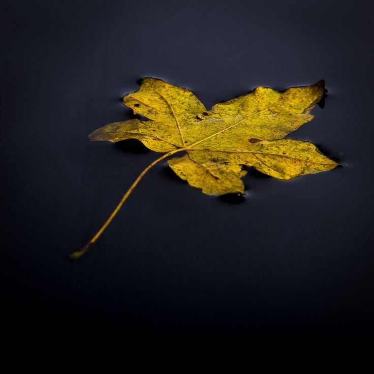 Herbst / Autumn  einfach mal treiben lassen