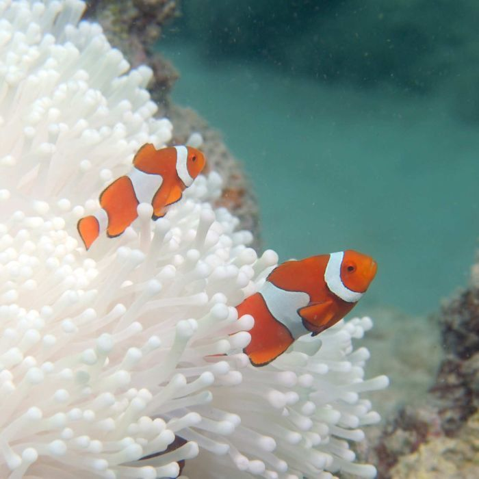 Aerial surveys show that 95 per cent of all northern reefs are suffering from severe coral bleaching. We have destroyed one of the great wonders of the world.