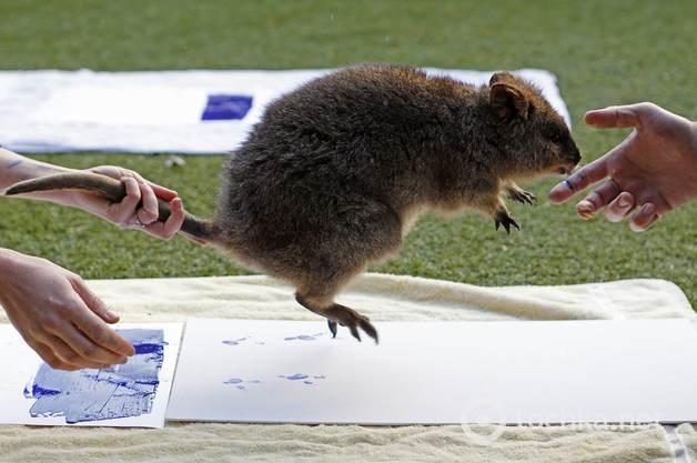 """В Сиднее звери """"расписались"""" для сохранения природы (фото)"""