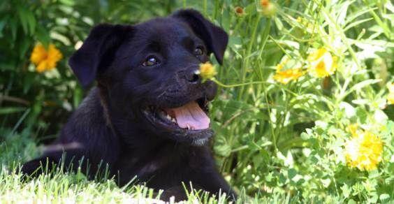 rimedi naturali cani
