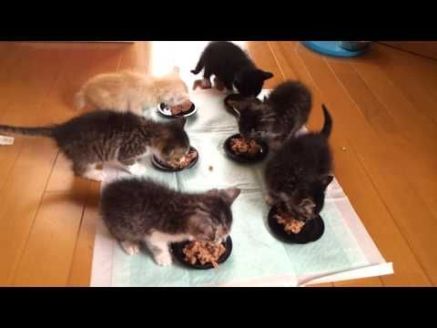 What it's Like to Feed 6 Hungry Kittens Cats Pinterest