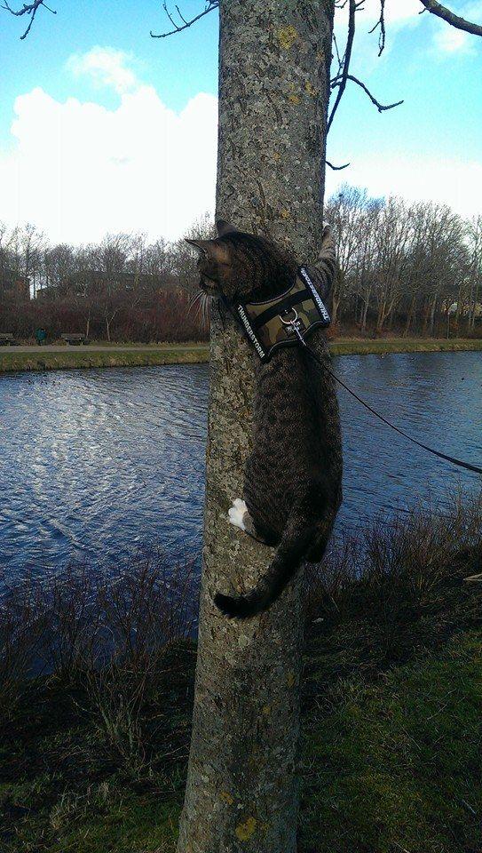 Momo in the tree