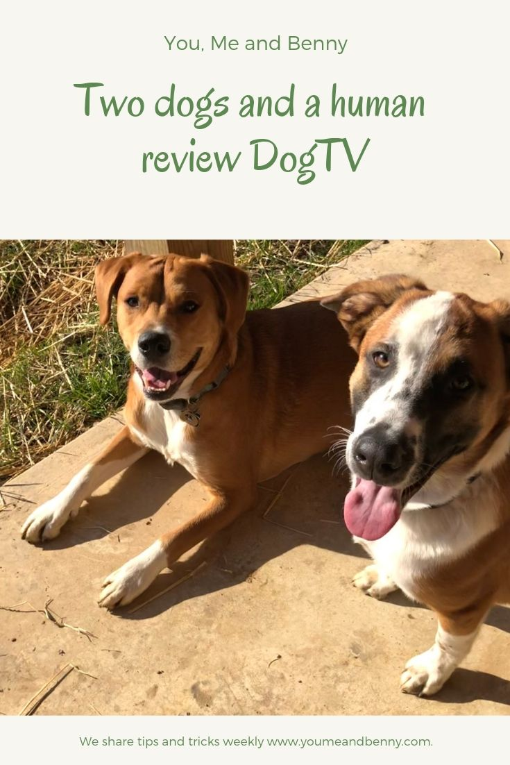 Dogs And Human Review Dogtv You Me And Benny Dogs Dog Biscuit Recipes Dog Mom