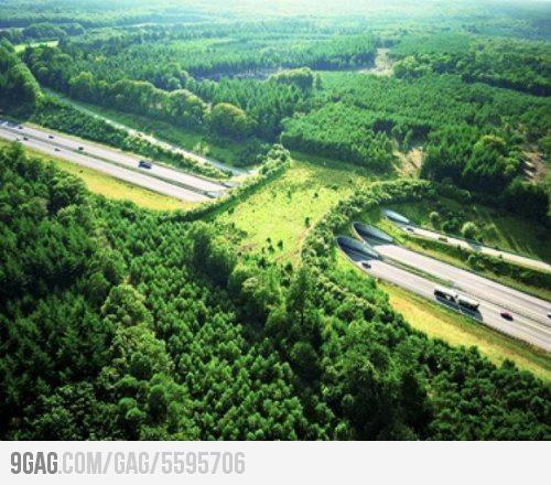A wildlife bridge to help animals cross the highway
